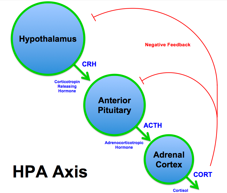 hpa axis dysfunction