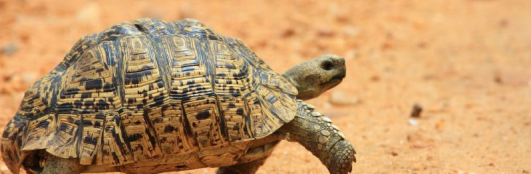 Kaizen: Why the Tortoise Beats the Hare and How You Can Too